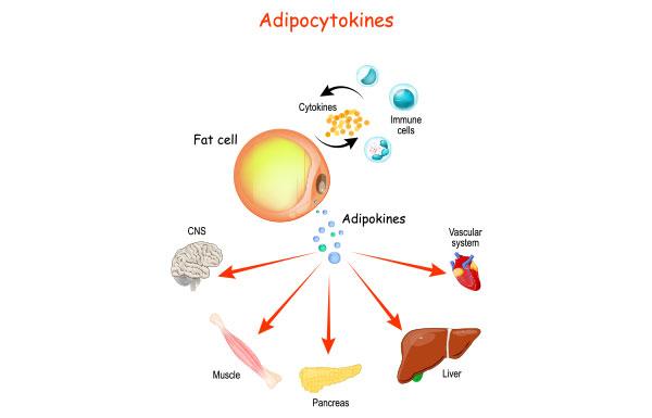 Role of Adipocytokines